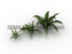 Fern Blechnum Bush Garden 3D Collection