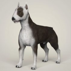 Realistic Bull Terrier Dog 3D Model
