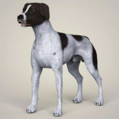 Realistic German Shorthaired Dog 3D Model