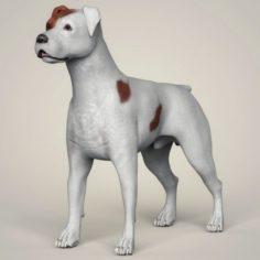 Realistic Parson Russell Terrier Dog 3D Model