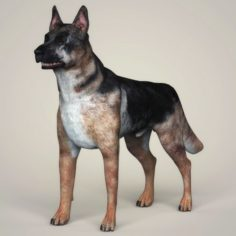 Realistic German Shepherd Dog 3D Model
