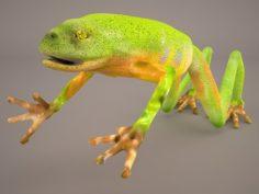 Frog 1 3D Model