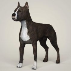 Realistic American Staffordshire Dog 3D Model