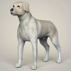 Realistic Labrador Dog 3D Model