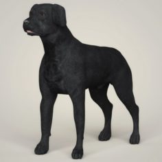 Realistic Black Labrador Dog 3D Model