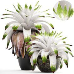 Tropical plant shrubs Bromelia 3D Model