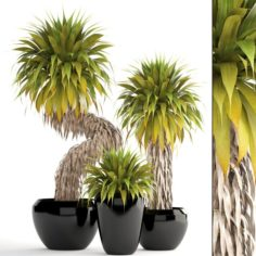 Collection of tropical plants Yucca 3D Model
