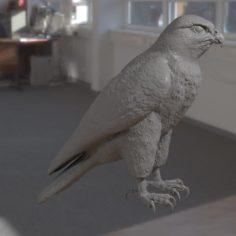 Falcon bird basic shape 3D Model