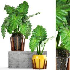 Tropical plant shrubs 3D Model