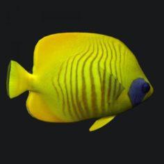 Cheek Butterfly fish 3D Model