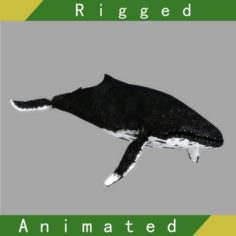 Whale Rigged Animated 3D Model
