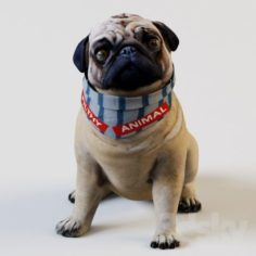 French bulldog sitting 3D Model