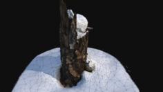 Photoscan Stump with snow 1 3D 3D Model