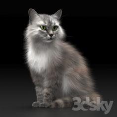 CAT 3                                      3D Model