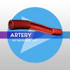 Artery w Blood Cells – LOW POLY 3D Model