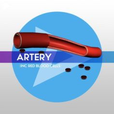 3D Artery w Blood Cells – LOW POLY 3D Model