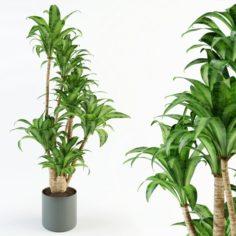 Palm tree in flowerpot 3D Model