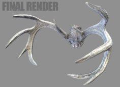 Deer Horns 3D Model