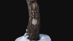 Photoscan Birch trunk with snow 1 model 3D Model