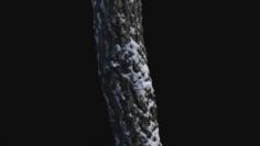 3D Photoscan Birch trunk with snow 3 3D Model