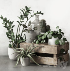 PLANTSET 2                                      3D Model