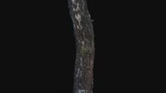 Photoscan Birch trunk with snow 5 3D Model