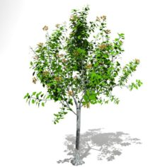 Tree 04 3D Model