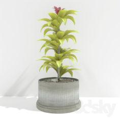 plant 01                                      Free 3D Model