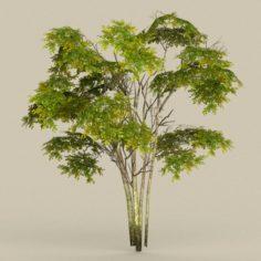 Game Ready Tree 29 3D Model