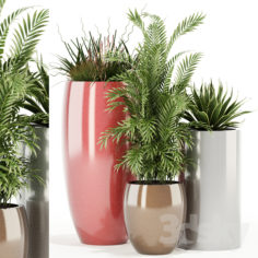 Plants collection 100 Awesomeplanters                                      3D Model