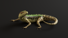 Green Lizard- Podarcis Sicula 3D Model