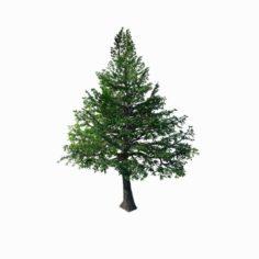 Chennault – evergreen 36 3D Model