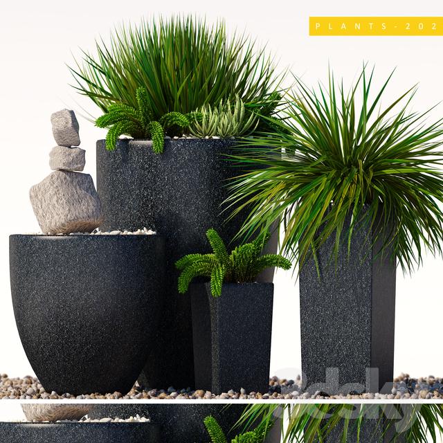 plants 202                                      3D Model