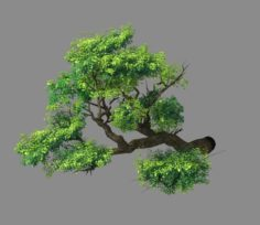Explore the mountains – Cliff – Tree 02 3D Model
