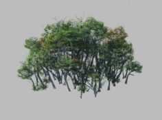 Plant Forest – Birch Grove 01 3D Model