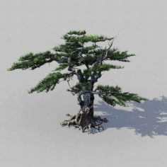 Journey to the West – Putuoshan – Pine 03 3D Model