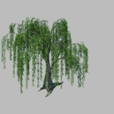 Plant – willow 1-2 3D Model