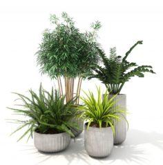 Plants Decor 4 3D Model