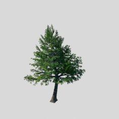 Cincinnati – Evergreen 3D Model