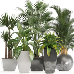 Collection of plants.                                      3D Model