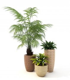 Plants Decor 3D Model