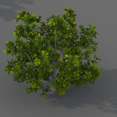 Journey to the West – shrub 03 3D Model