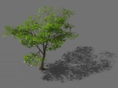 New Village – Landscape 02 3D Model