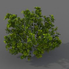 Journey to the West – shrubs 01 3D Model