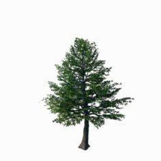 Sennard – evergreen 35 3D Model