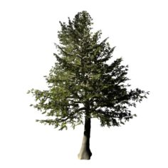 Chennault – Evergreen 33 3D Model