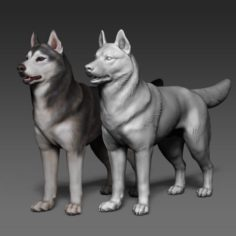 Siberian Husky high polygon with polypaint 3D Model