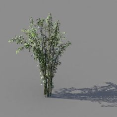 Journey to the West – Putuoshan – Bamboo 03 3D Model