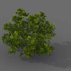 Journey to the West – shrubs 02 3D Model