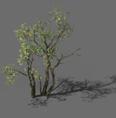 Explore the mountains – Grove 03 3D Model